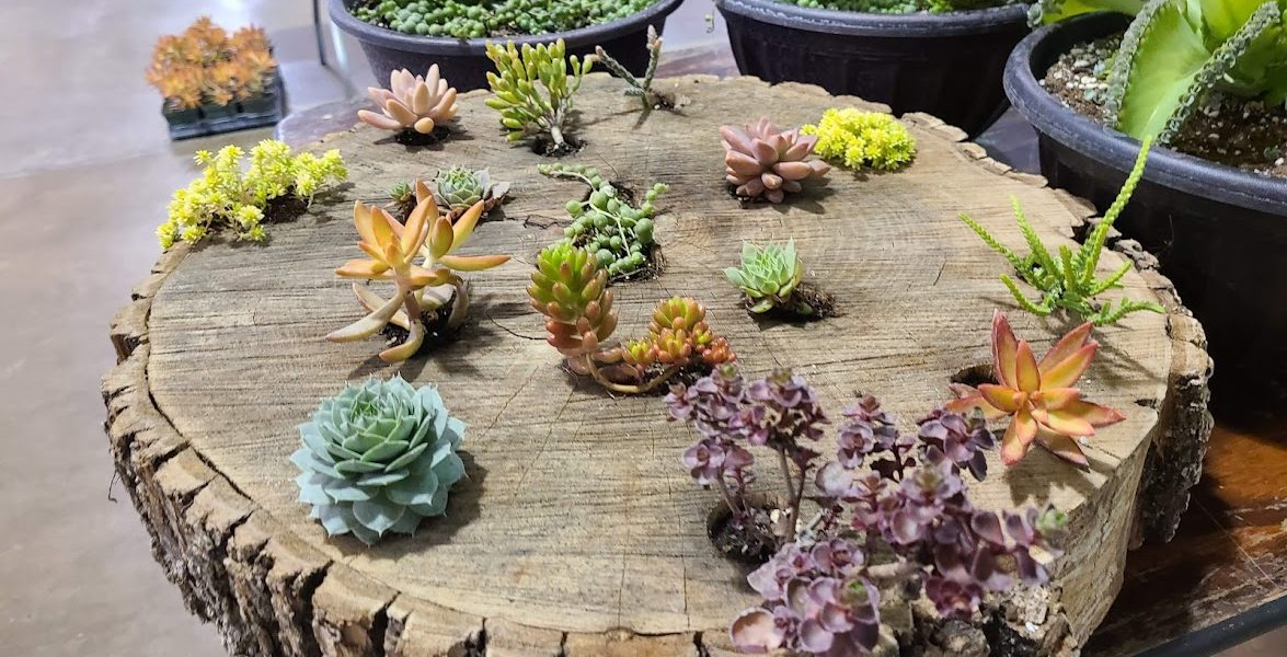 piece of a tree trunk with succulents growing out of it.